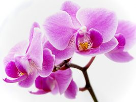 Orchid food menu for funerals.
